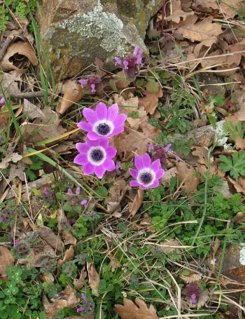 Честита Първа Пролет