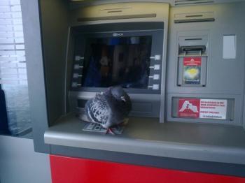 Богат гълъб
