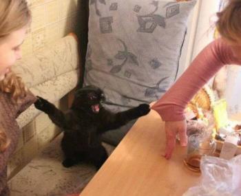 Котка нинджа
