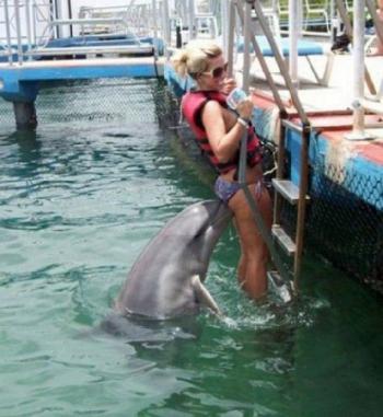 Делфин сваляч