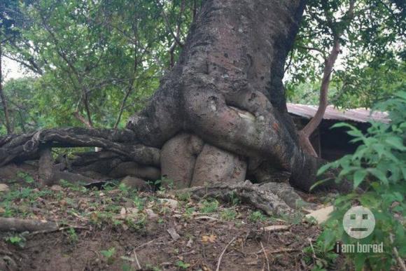 Секси дървета