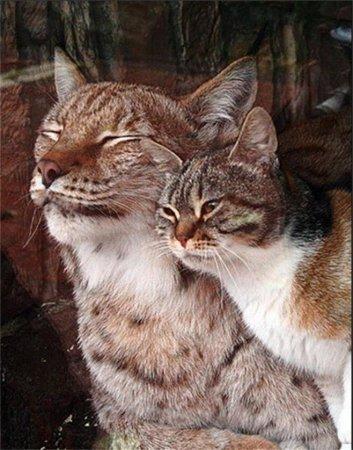 Чудното приятелство