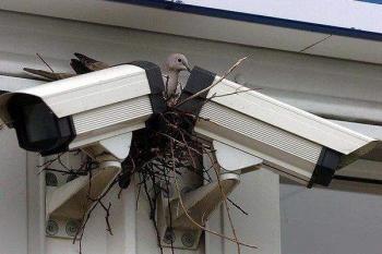 Камера от птичи поглед