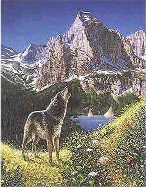 Можеш ли да намериш останалите 4 вълци?