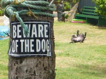Пази се от кучето