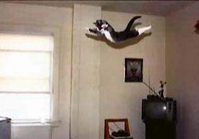 Летяща котка!