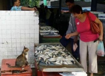 Коте, ти ли продаваш рибата?