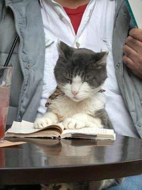 Ученолюбиво коте