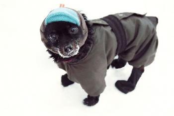 а ти готов ли си за зимата?