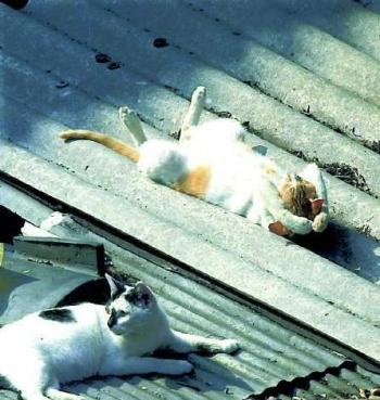 Котки