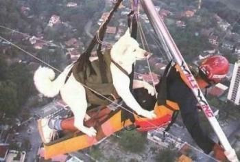 Бъки - Летящото куче