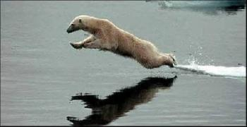 Бял мечок подражава на Христос
