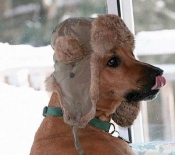 кучи студ