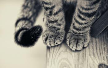 Притча за котешкия късмет