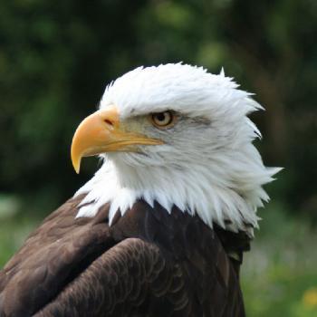 Притча за орела