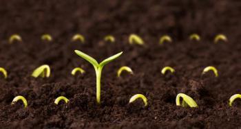 Семената на Съдбата