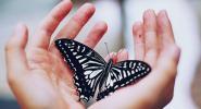 Учителят и пеперудата