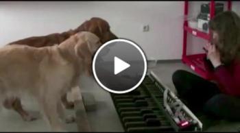 Две талантливи кучета с музикални наклонности