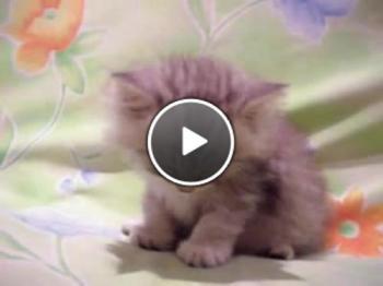 Заспиващо котенце - сладур