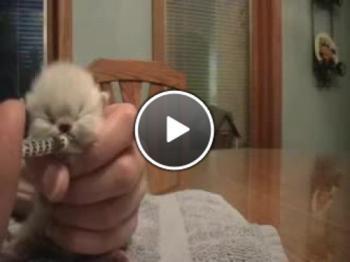 Много сладко бебе коте