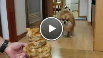 Плюшена играчка дразни куче