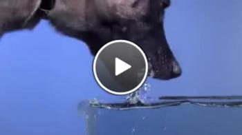 Как всъщност пие вода едно куче (забавен кадър)