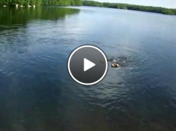 Кучета ловят риба