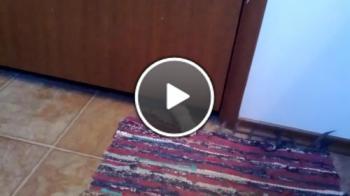 Котка Краде Килимче