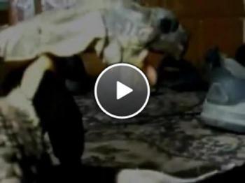 Костенурка изнасилва обувка