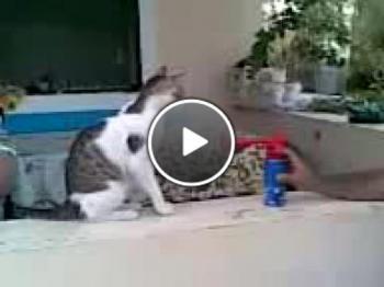 Как се плаши котка със силен звук