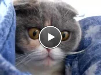 Обърнете внимание на очите на котката