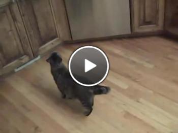 Как да откажете котка да краде храна