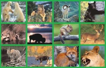 Какво животно си според зодията